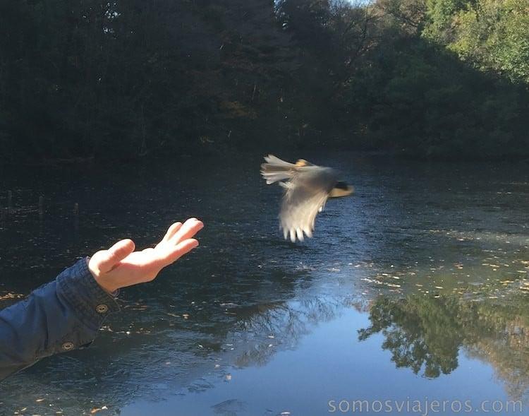 pájaros en viaje a tokio 2