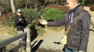 El hombre que amaestraba los pájaros en mi viaje a Japón