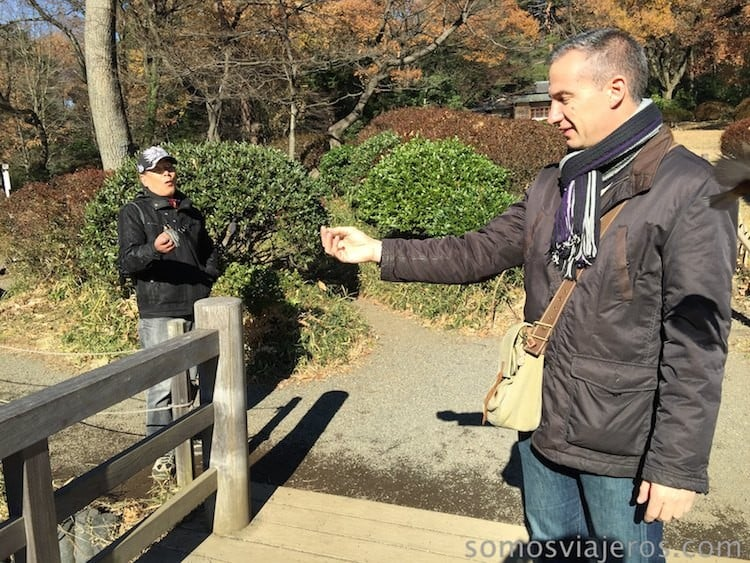 pájaros en viaje a tokio 5