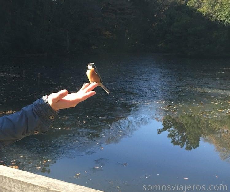 pájaros en viaje a tokio