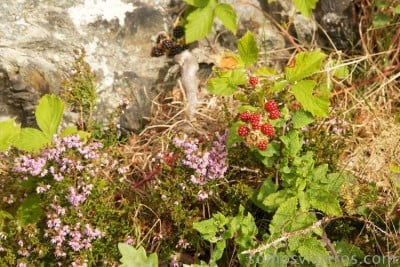 flores en el lago katrine