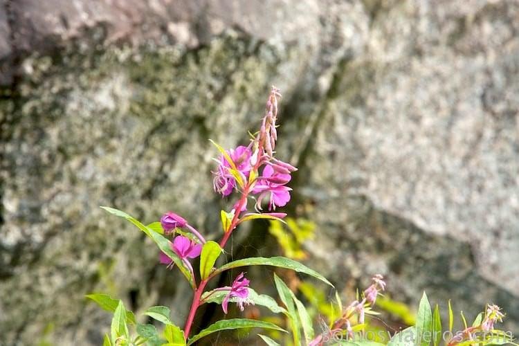 flores en el lago katrine en escocia