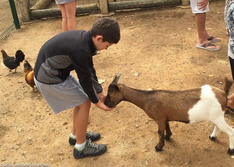 pau dando de comer a los animales