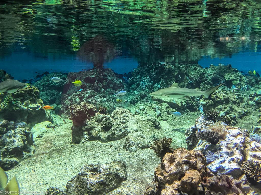 Montpellier acuario-20