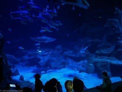 Tiburones acuario Montpellier