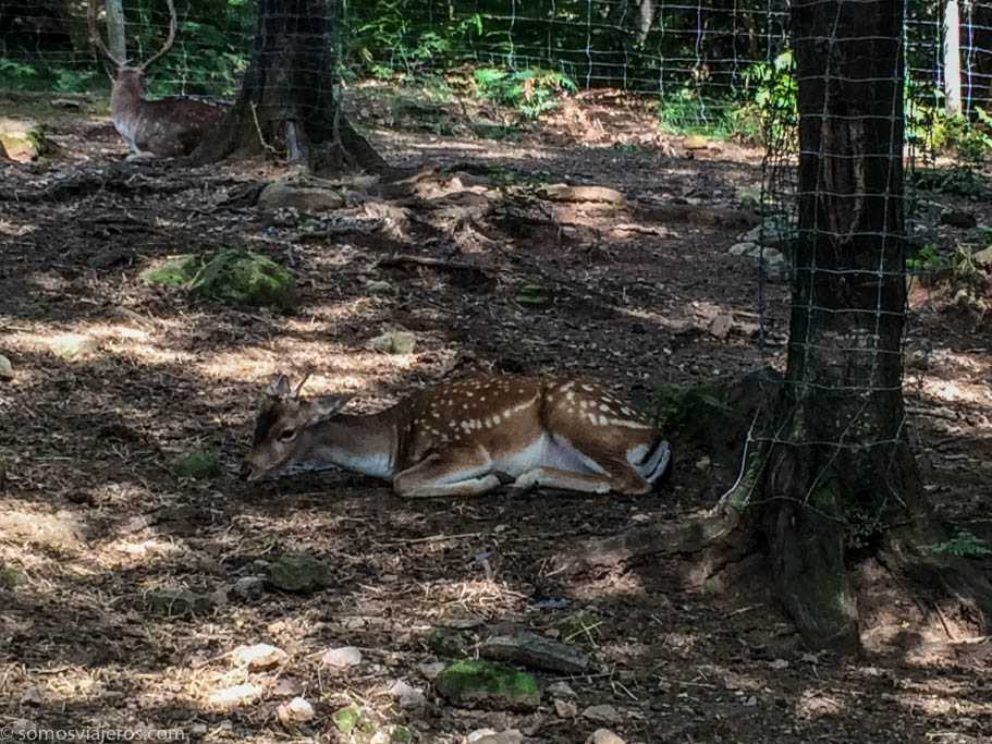 Lacuniacha parque de animales