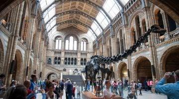 Vacaciones con niños en Londres: Museo de historia natural