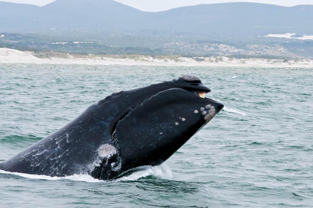 ruta de las ballenas