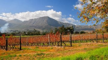 Cape winelands: Ruta del vino en Sudáfrica