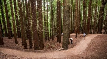 Cantabria con niños: Aventuras entre las gigantes secuoyas