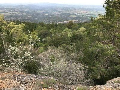 vegetación camino a la cova dels calaixos