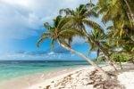 La increíble isla de Guadalupe