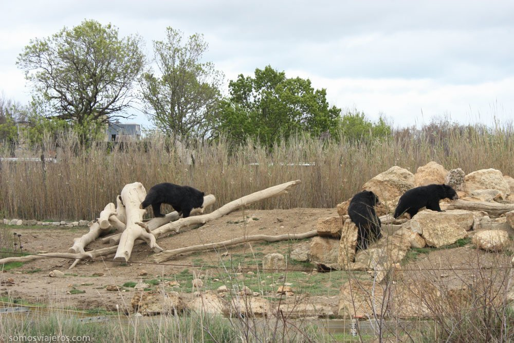 osos en la reserva africana de Sigean