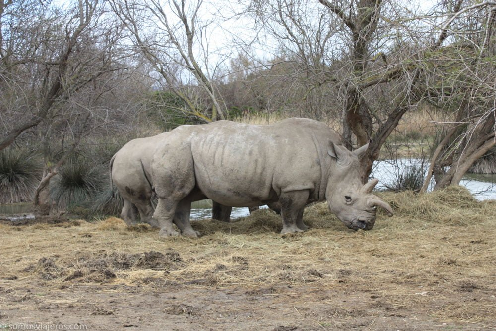rinocerontes en la reserva africana de Sigean