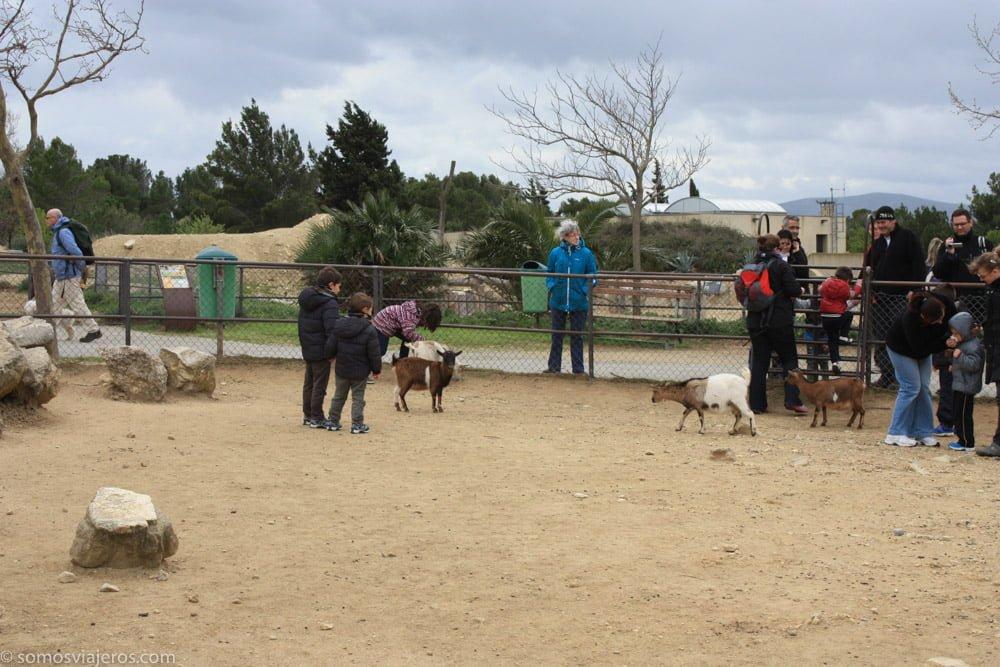 zona de animales para niños en la reserva africana de Sigean