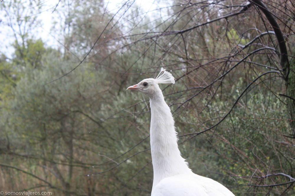 aves blancas en reserva de sigean
