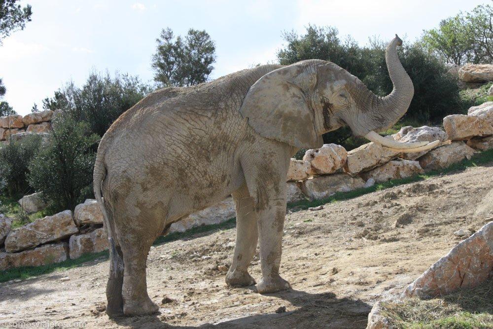 elefante en la reserva africana de Sigean