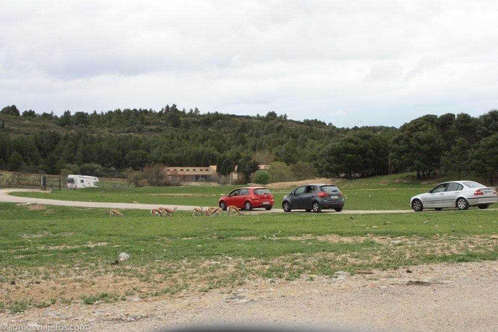 carretera y coches dentro de la reserva africana de sigean