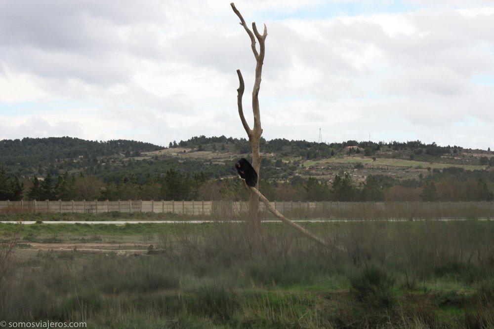 osos en reserva africana de sigean