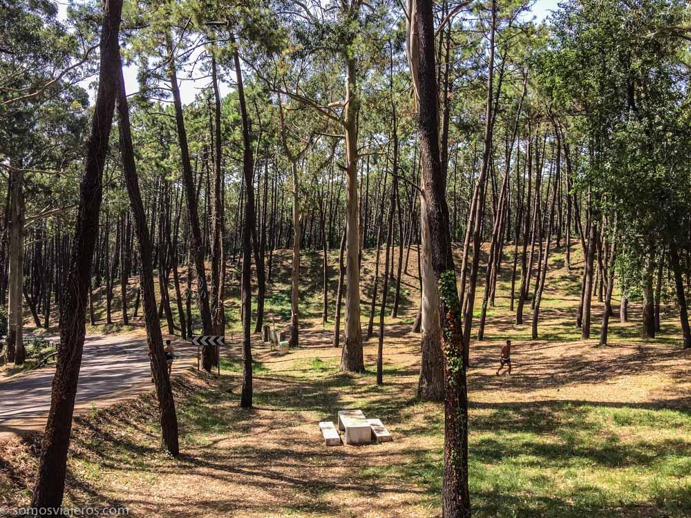 parque natural de las dunas de liencres en Cantabria - bosque de pinos