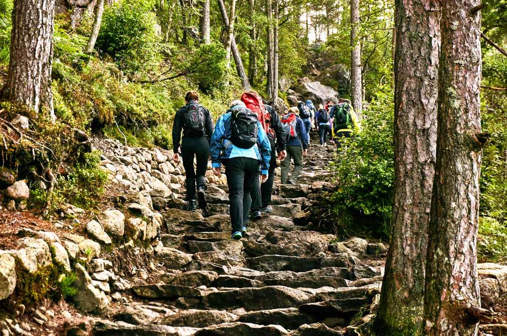 Camino al preikestolen por el bosque