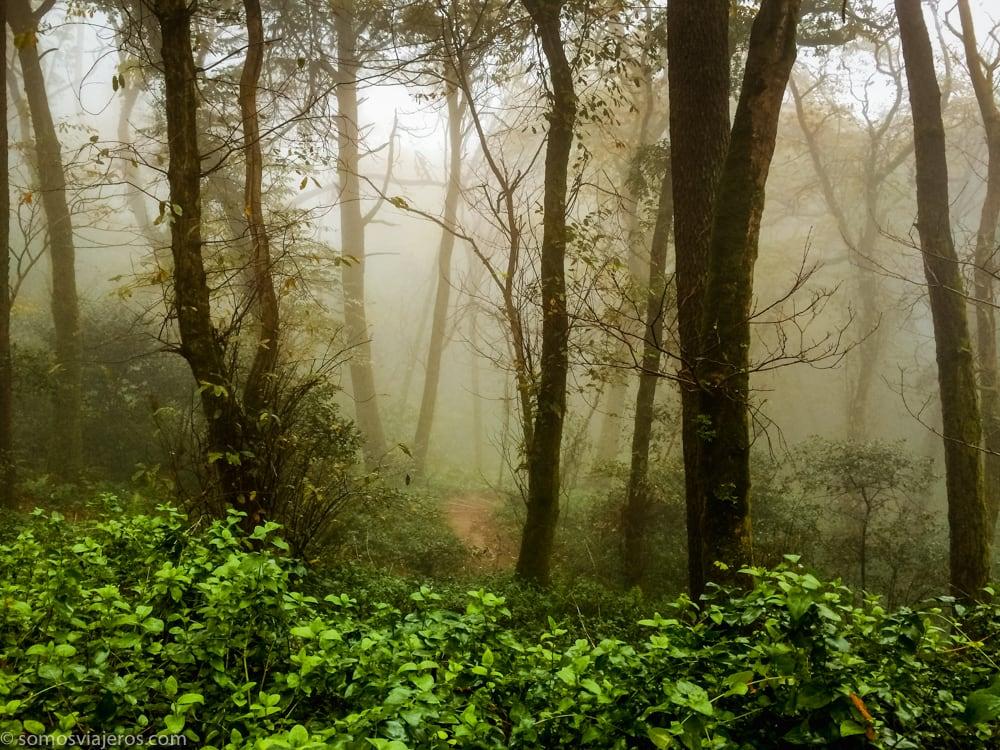 bosque palacio da pena