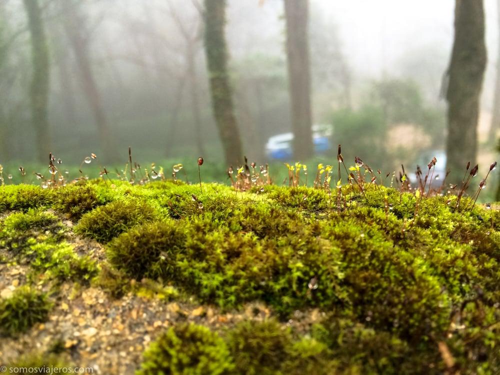 musgo en bosque de portugal