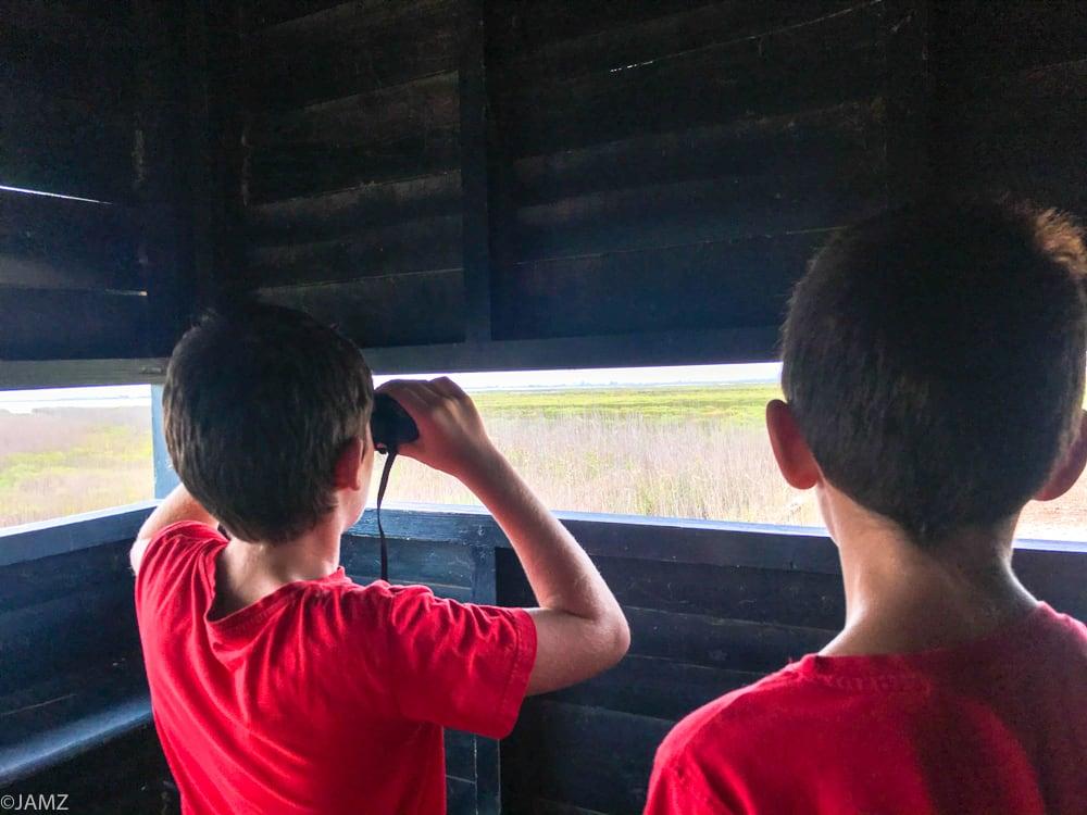 observando las aves