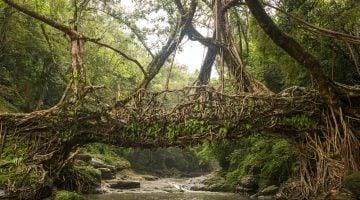 Los lugares más lluviosos del mundo y el más seco.