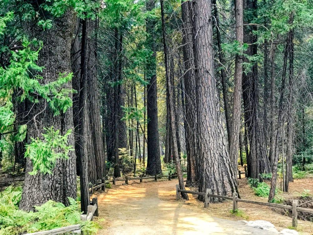 camino hacia las Yosemite falls