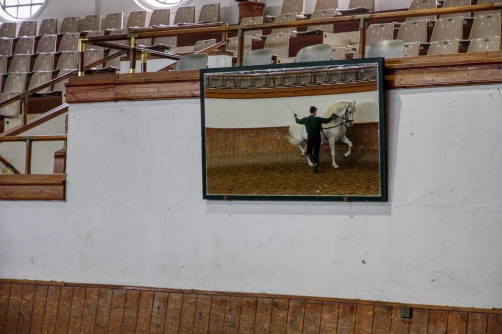cuadro y espejo de doma en la Real Escuela del Arte Ecuestre en Jerez
