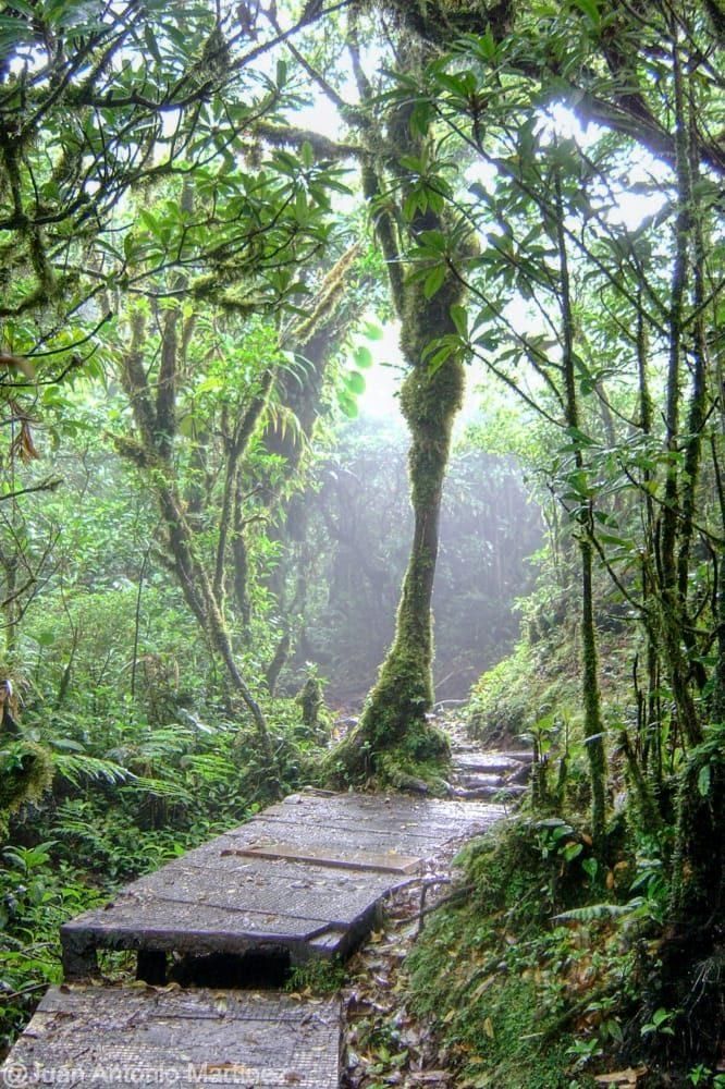 Selva de Monteverde en la ruta por Costa Rica