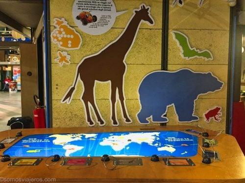 el mundo animal en el museo dei bambini