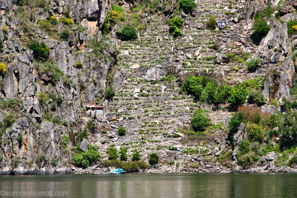 Viñedos en la ribera Sacra de Galicia